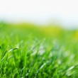New spring green grass for design — Stock Photo