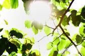 Soleil et le feuillage des arbres — Photo