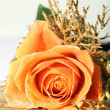 Beautiful rose — Stock Photo #10834411