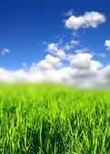 Green grass fild — Stock Photo