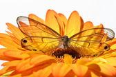 Schmetterling auf Blume — Stockfoto