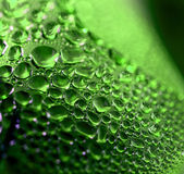 Green drops — Stock Photo