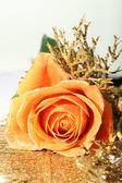 Beautiful rose — Stock Photo