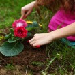 Stock Photo: Girl grow flower