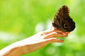 Butterfly on a female hand — Stock Photo