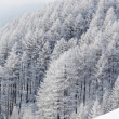 Forest in snow — Foto de Stock