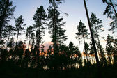 Fondo de árbol — Foto de Stock