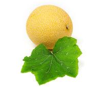 Galia melone — Stock Photo