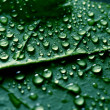 Waterdrops — Stock Photo #11309539