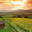 Green meadow under sunset sky with clouds — Foto de Stock