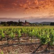 Orange Sky over Green Vineyard - Stock fotografie