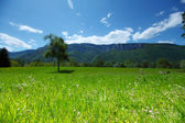 весна альпы — Стоковое фото