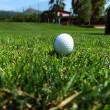 Golf-ball on course — Stock Photo #11578905