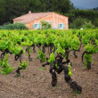 Stock Photo: Vineyard in france