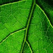 Green leaf — Stock Photo #11579332