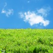Green grass landscape — Stock Photo #11579555