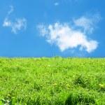 Green grass landscape — Stock Photo