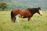 夏の草原の馬 — ストック写真