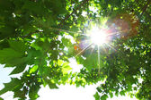 Zelené listy a slunce — Stock fotografie