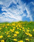 Frühlingslandschaft — Stockfoto