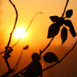 Leaf sunset — Stock Photo #11580249