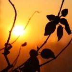 Leaf sunset — Stock Photo