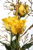 Rosas amarelas — Fotografia Stock