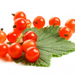 Isolated red currant and leaf — Stock Photo #11598921