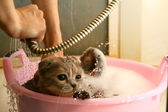 Wash cat — Stock Photo