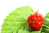 Raspberry and green — Stock Photo