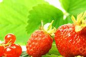 Frutos silvestres — Foto de Stock