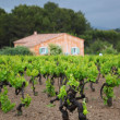 Vineyard in france - Stock Photo