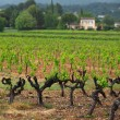 Vineyard in france - 