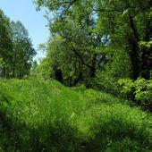 зеленая трава на поле для гольфа — Стоковое фото