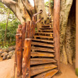 Stairs to tree house — Stock Photo #11744434