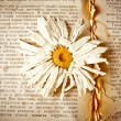 Old book with dry flower — Stock fotografie