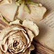 Vintage still life with dry rose and old book — Stock Photo