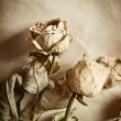 Roses and old book — Stock Photo