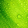 Beautiful green leaf with drops of water — Stock Photo #11156674