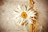 Old book with dry flower — Stock Photo
