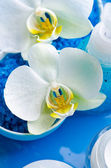 White orchid flowers on blue background — Stock Photo