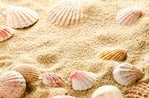 Seashell bakgrund — Stockfoto