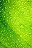 Beautiful green leaf with drops of water — Stock Photo