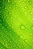 Prachtige groene blad met druppels water — Stockfoto