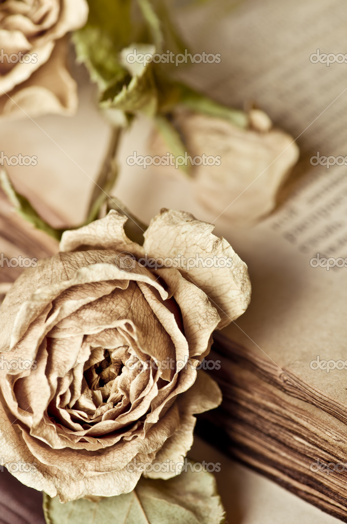 Vintage still life with dry rose and old book — Stock Photo #11150988