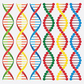 Molecules of DNA. — Stock Vector