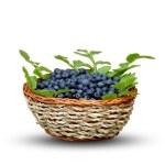 Isolated blueberry basket — Stock Photo #11650458