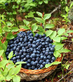 Fresh blueberries in a basket — Stock Photo