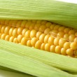 Sweet corn — Stock Photo #11810108