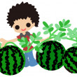 Cultivating watermelons — Stockvectorbeeld